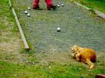 Il campo da bocce, gioco preferito di Ribes, il nostro gattone rosso