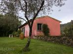 L'Olivo - Villa Unis - Holiday in Tuscany