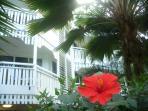 set in tropical gardens