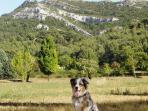 Le plateau St Germain et le chien de la maison