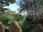 Red House The private garden Flowers and olive tree