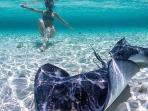 Great shot taken of Bimini life under water