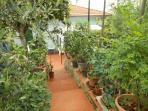 Giardino  con piante di limoni