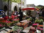 Spring flower fairs in local villages