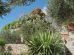 flourish plant (house and surroundings)