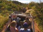 Discover the Sonoran Desert