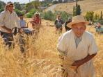 Harvest time at the foot of the High Atlas.