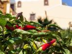 Garden detail (your small organic farm)