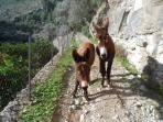 You might come across these two if you are out for a walk - so cute.
