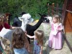 Child friendly Alpaca