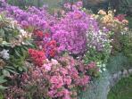 I fiori  nel giardino in primavera