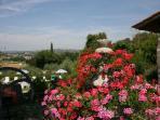 fontana di fiori