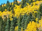 Taos canyon is beautiful any time, but fall is spectacular!