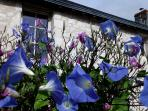 Les jolies fleurs de Touraine