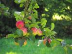 September apples