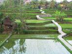 View of the rice fields beyond the rear gate, taken from the tower office.