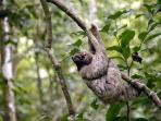 Ask us about wildlife tours and where to view sloths!