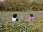 Wild flowers are abundant and beautiful in the Hill Country.  Best during March - May.