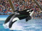 Sea World - just a short one-hour drive away.  A fantastic family day out