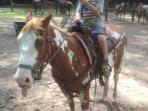 Horse Back riding