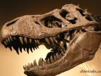 Explore dinosaur tracks and fossils at Canyon Lake Gorge