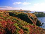 Discover Pembrokeshire as well as Carmarthenshire.