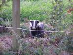 Meet one of our badgers, photo kindly donated by a guests. Viewing can be arranged.