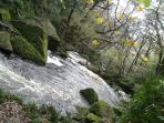 Nearby Golitha Falls