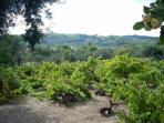 Or stroll around the vineyard and enjoy the peaceful atmosphere