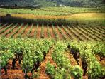 Penedes Wine Country