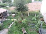recolectar, plantar, sembrar... y luego cocinar los productos de nuestra huerta