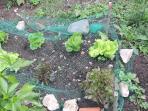 Lechugas, calabacines, alubia verde, pimientos, tomates...