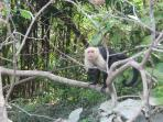 White face monkey close by