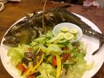 Whole oven roasted giant trevally with garden salad.
