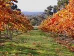 vineyard behind Candlebark Retreat