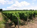 Local wine trail