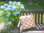 A comfortable bench, surrounded by hydrangeas.