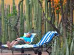 Quiet pool side patios, this one is at the Bird of Paradise
