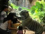 Zoo diseñado para el Hábitat de cada animal como en su propio país.