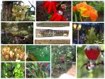 Botanical Gardens with over 700 varieties, hummingbird sanctary, fish & turtle ponds
