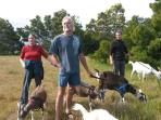 Walking the goats is often an option!