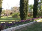Le parc arboré au printemps