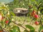 Località il Piano farmhouse, seen through the apple orchard. The apartment is on the top floor.