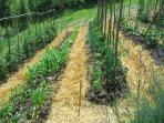 Vegetable garden, our organic produce is for sale