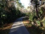 Woods path near our door