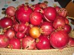 Freshly picked pomegranate. You can enjoy during your stay!