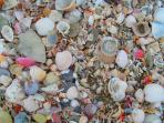 A natural depository discovered on the south beach - changes with each tide!