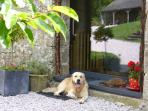 A warm welcome awaits you from the owners along with their friendly dog