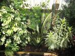 Our pool is fenced for total privacy (which is uncommon) and is surrounded by some lovely plants