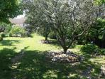 Oliviers De Provence dans leJardin / Garden